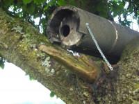 Naturschutzprodukt Steinkauzröhre Typ 20A mit Marderschutz
