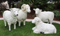 Dekorationsfiguren Schafbock und Schafe lebensgroß H 40-72 cm Gartenfiguren Gartendeko aus Kunstharz