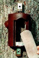 Naturschutzprodukt Baumläuferhöhle Typ 2B räubersicher Satz 2 Stück Artenschutz Produkt